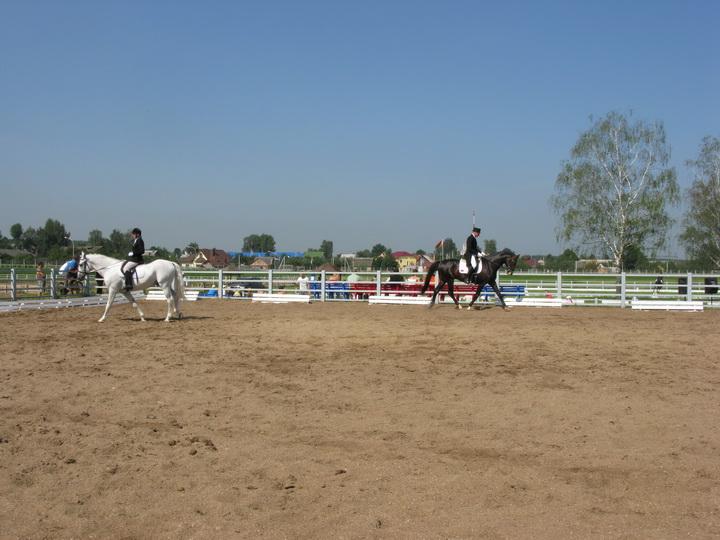 хорошо обучены конному спорту